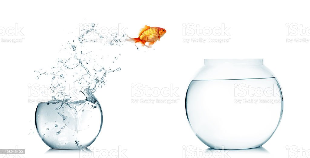 Goldfish jumping out of the fishbowl stock photo