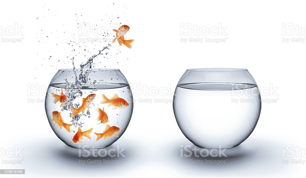 goldfish jumping out of the water  - freedom stock photo
