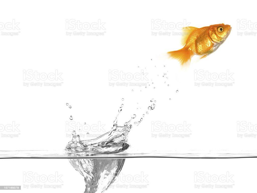 Goldfish Jumping Water Drop stock photo