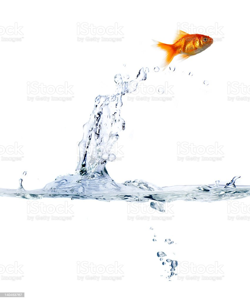 Goldfish leaping out of water stock photo