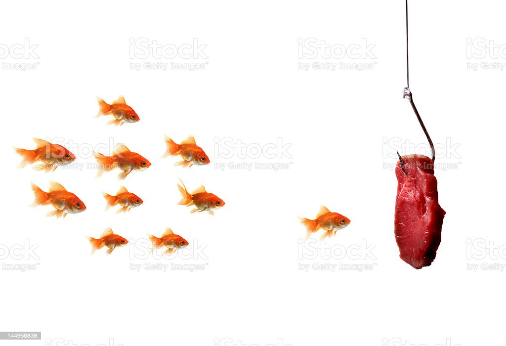 goldfish looking at the bait royalty-free stock photo