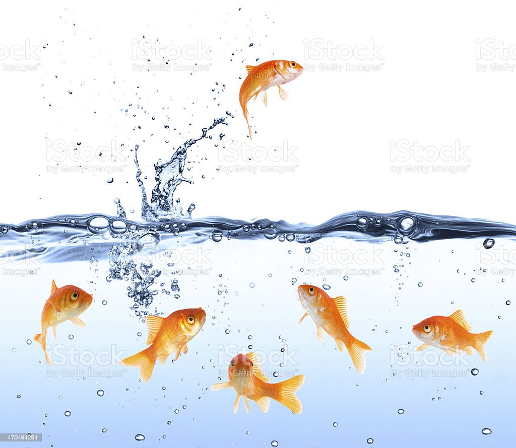 goldfish looking for way out stock photo