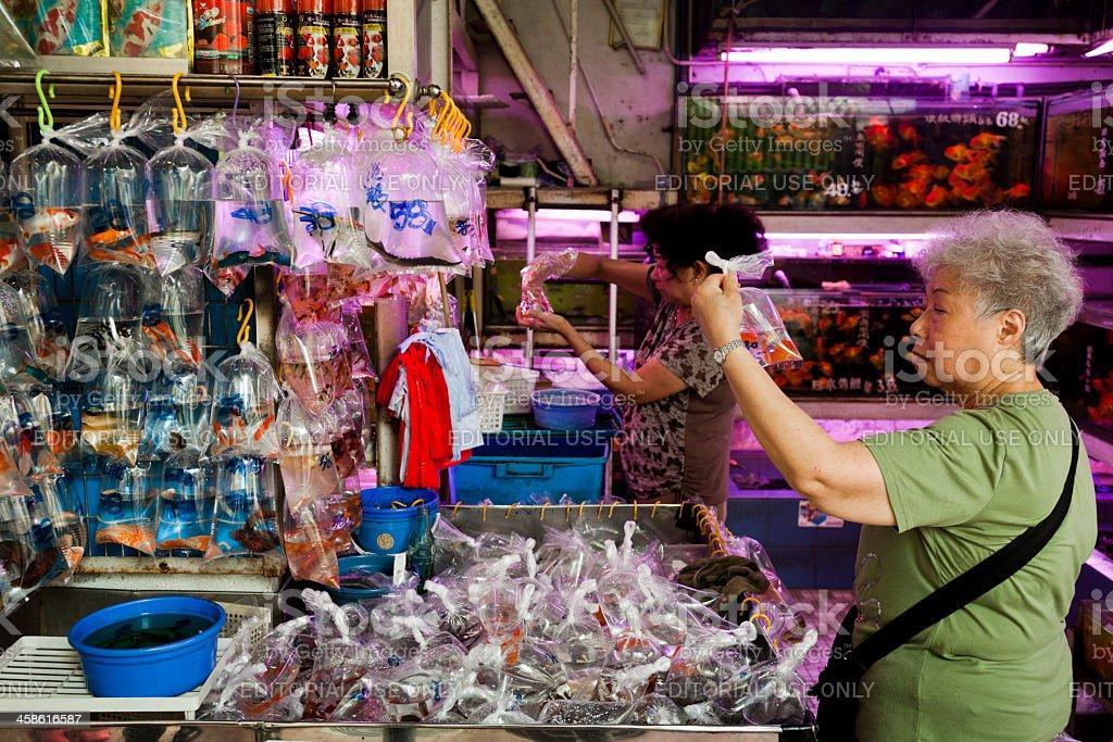 Goldfish market in Hong Kong stock photo