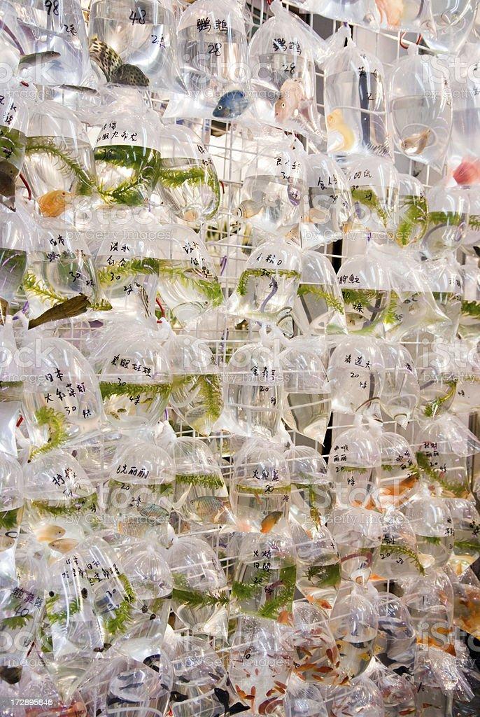 goldfish market royalty-free stock photo