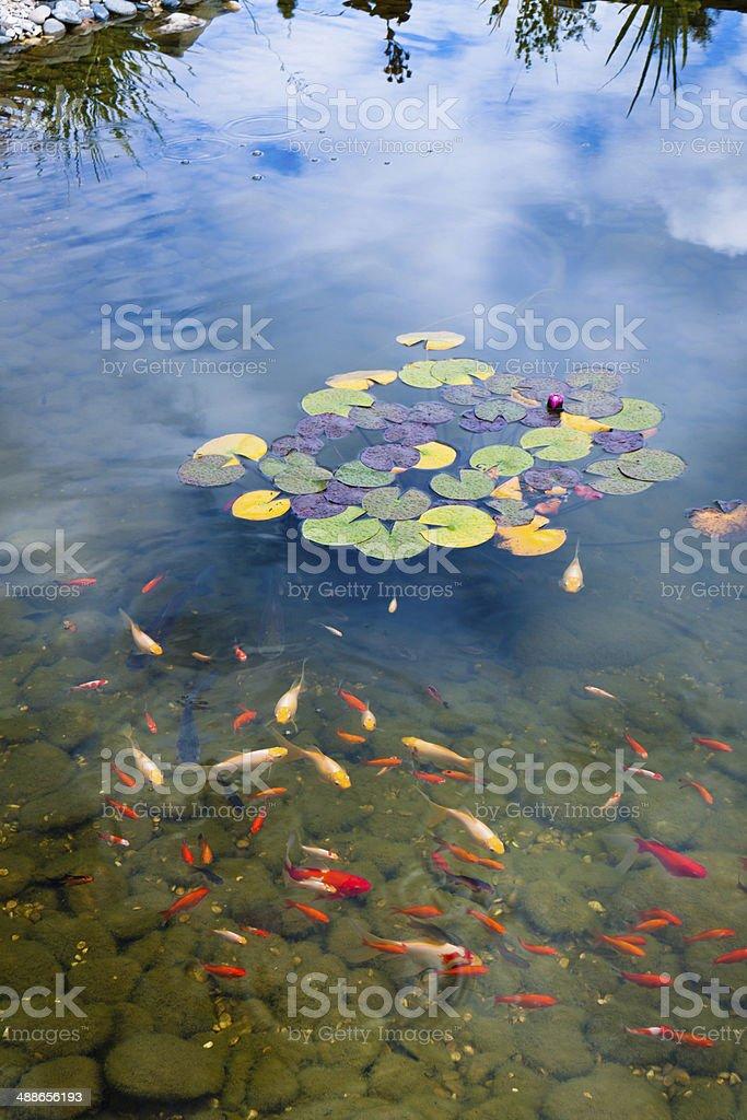 Goldfish pond stock photo
