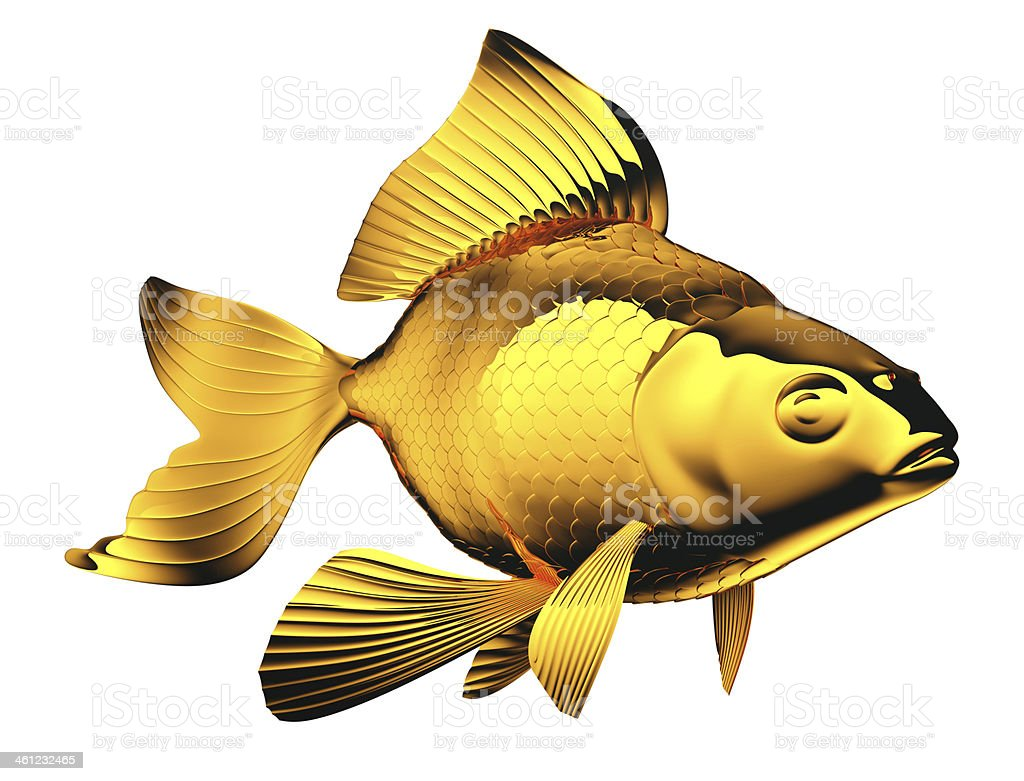 Goldfish with beautiful fins and scales isolated royalty-free stock photo