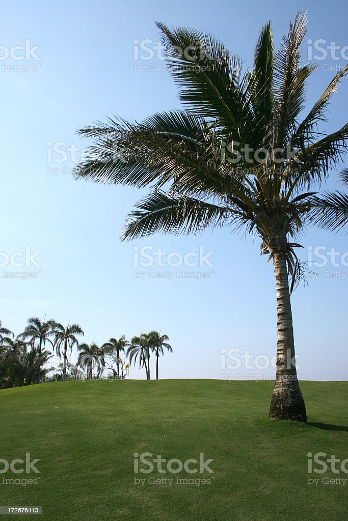 Golf and palms royalty-free stock photo