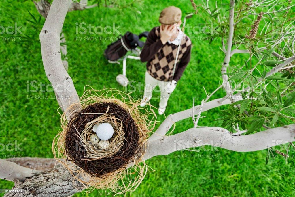 Golf Ball in Bird Nest stock photo