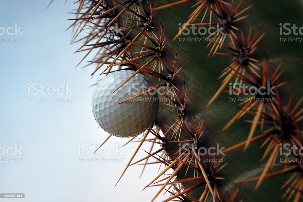 Golf ball in cactus 11 royalty-free stock photo