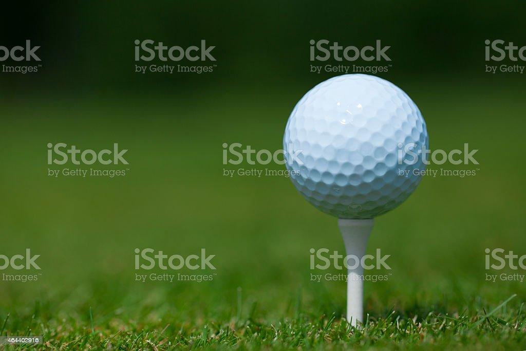 golf ball on a white tee stock photo