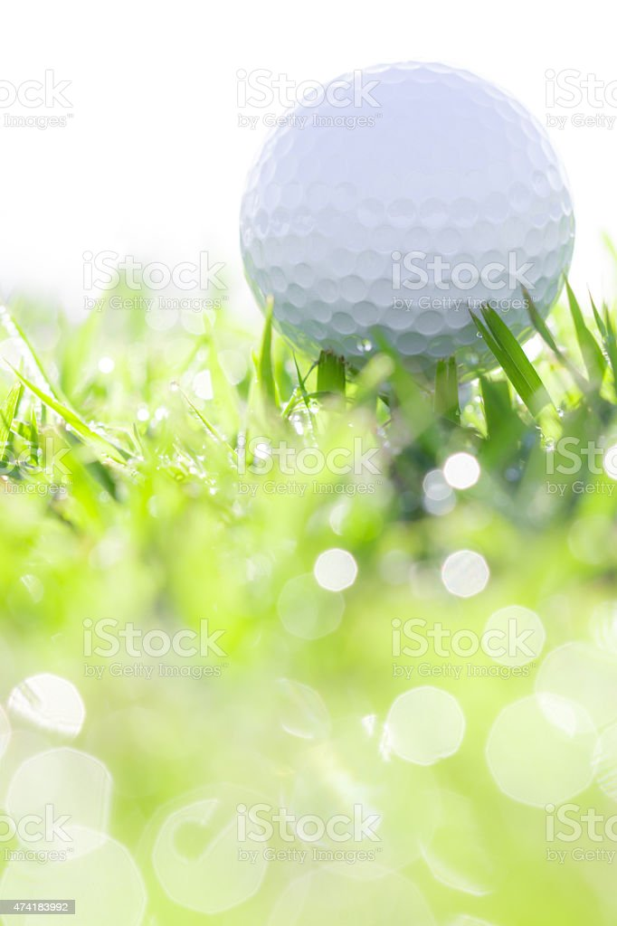 golf ball on grass with water drops stock photo