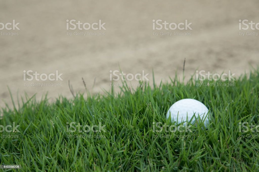 golf ball on the grass near the sand bunker stock photo