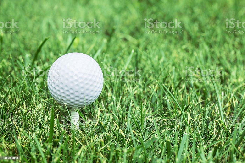 Golf ball on the green grass. stock photo