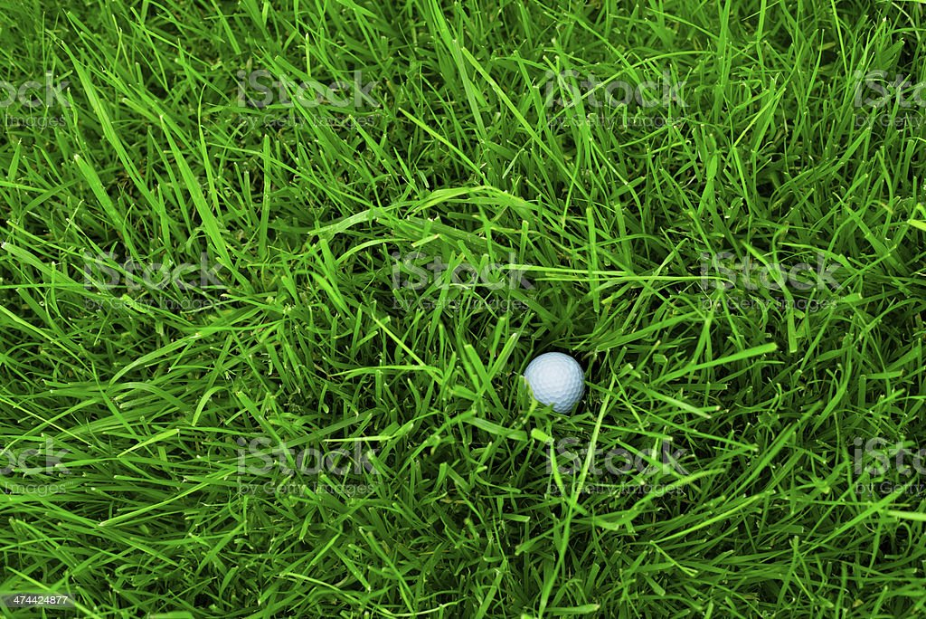 Golf ball stuck in thick rough grass stock photo
