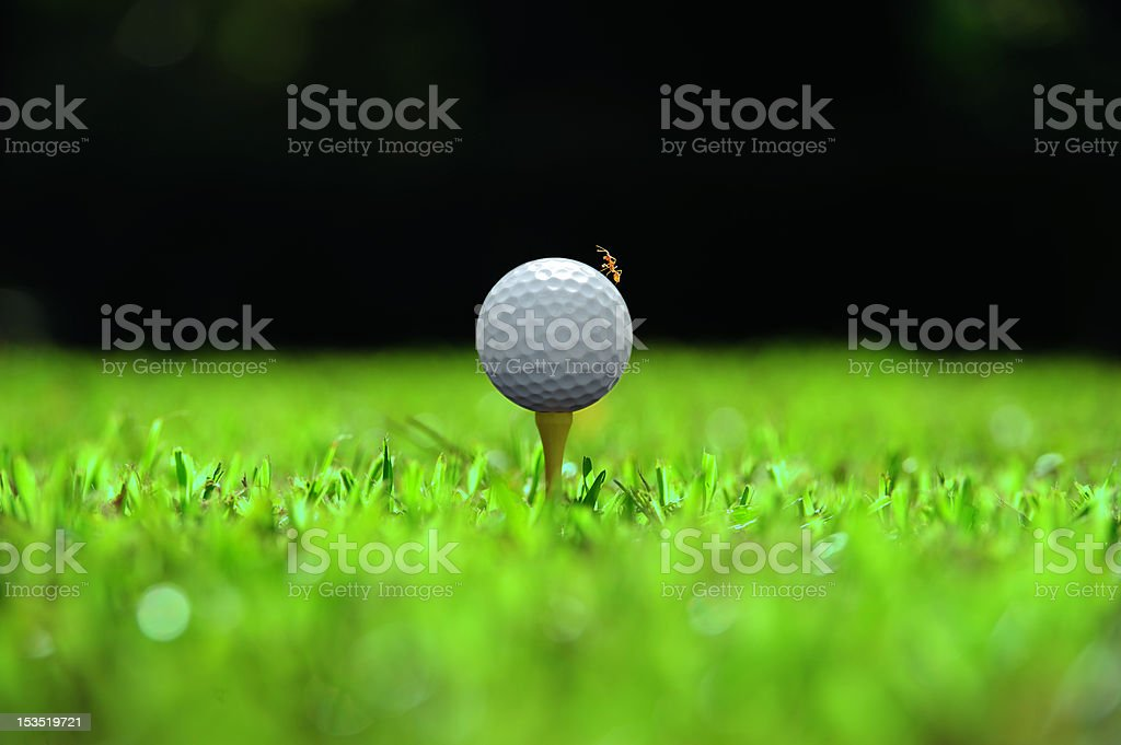 golf ball with ant on top in natural surrounding royalty-free stock photo