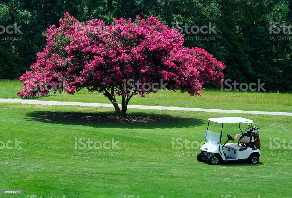 Golf cart near pink blossomed tree on course stock photo