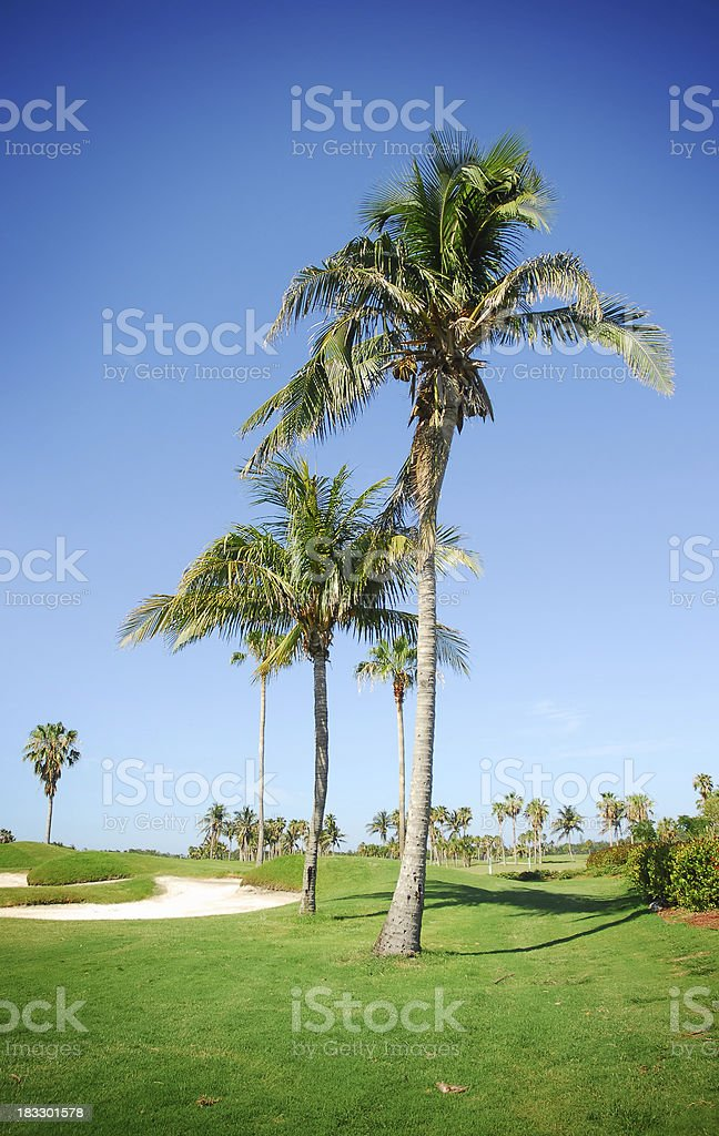 golf club and palms royalty-free stock photo