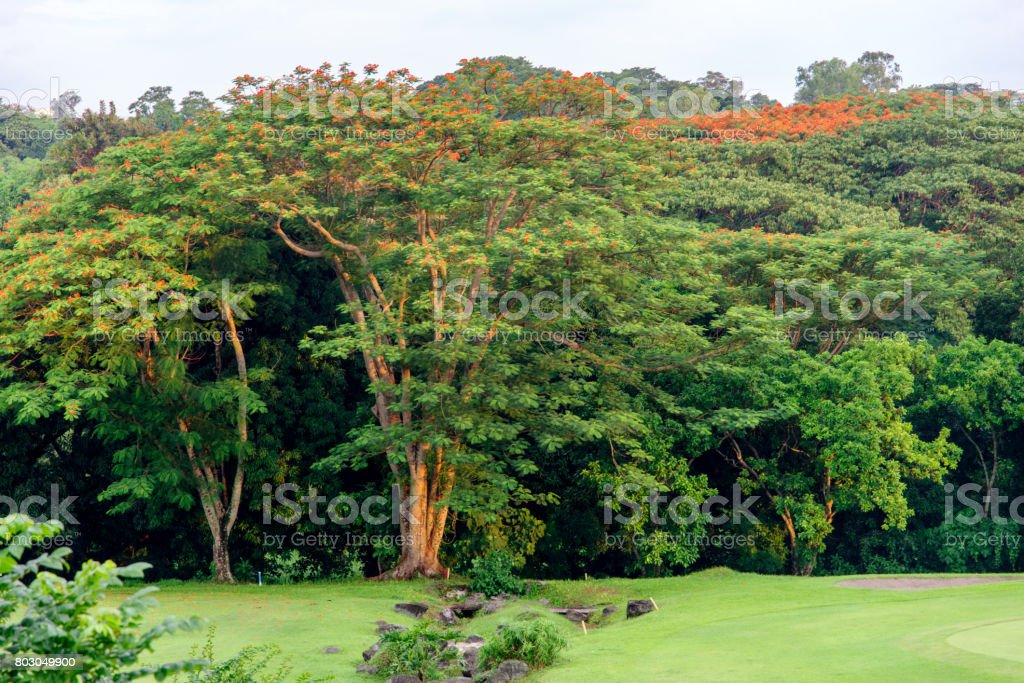 golf club at the Philippines stock photo