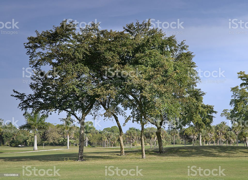 Golf Course in Florida royalty-free stock photo