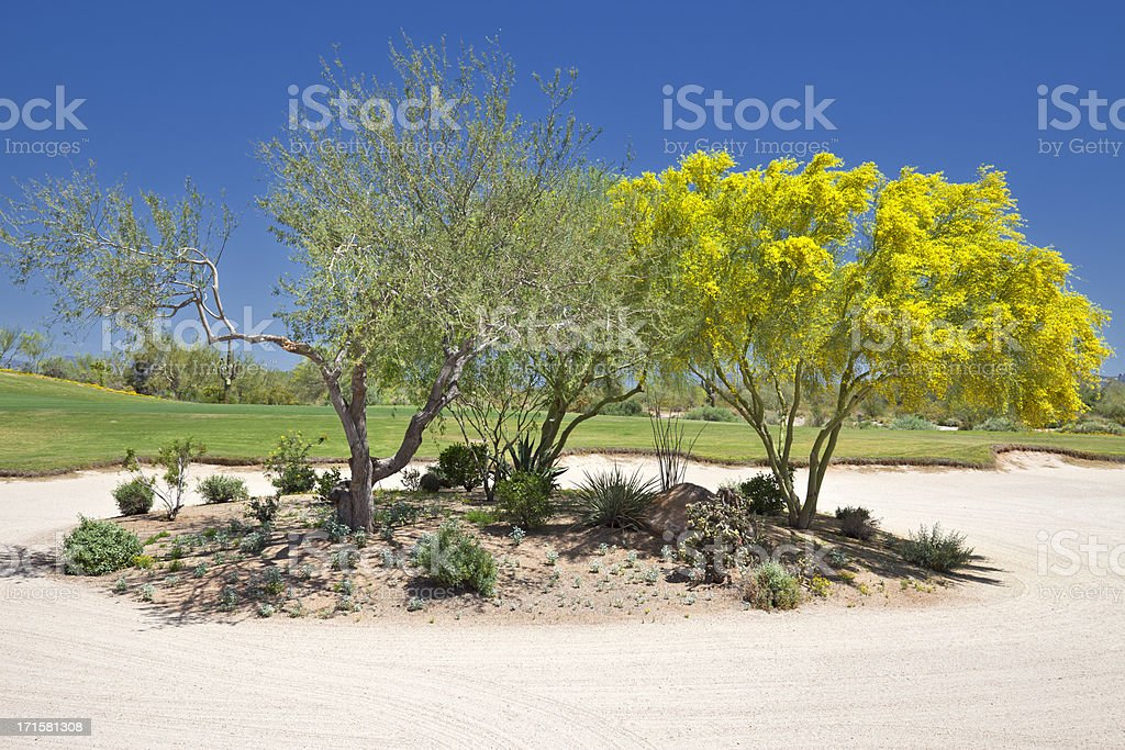 Golf Course Landscaping royalty-free stock photo