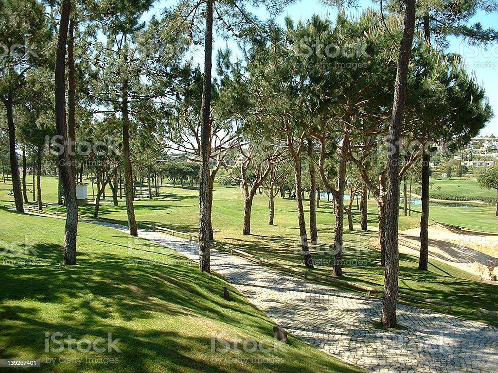 Golf course with pines royalty-free stock photo