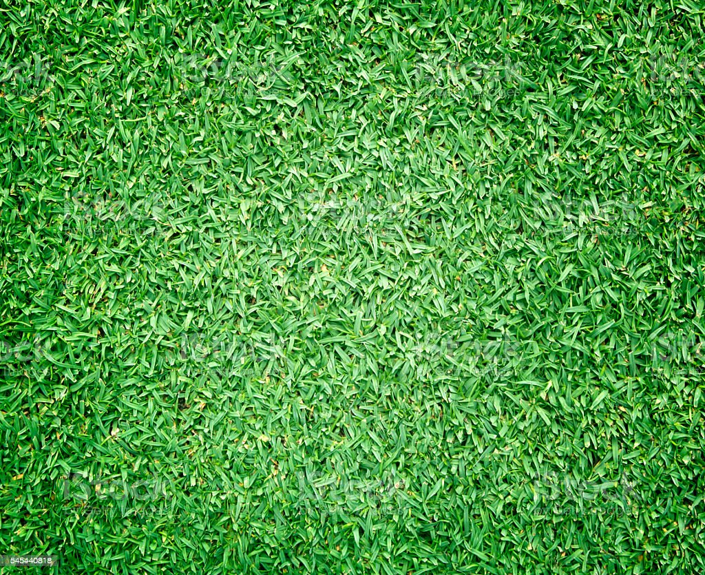 Golf Courses green lawn stock photo