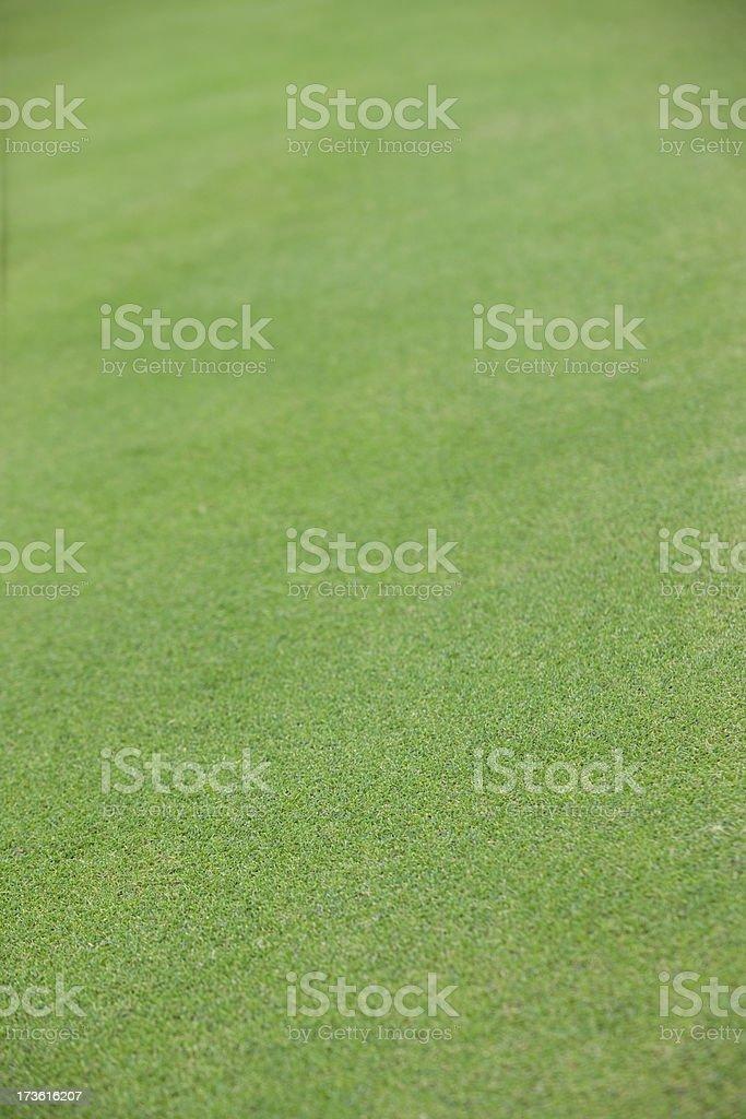 Golf grass royalty-free stock photo