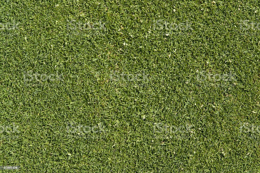 golf green detail royalty-free stock photo