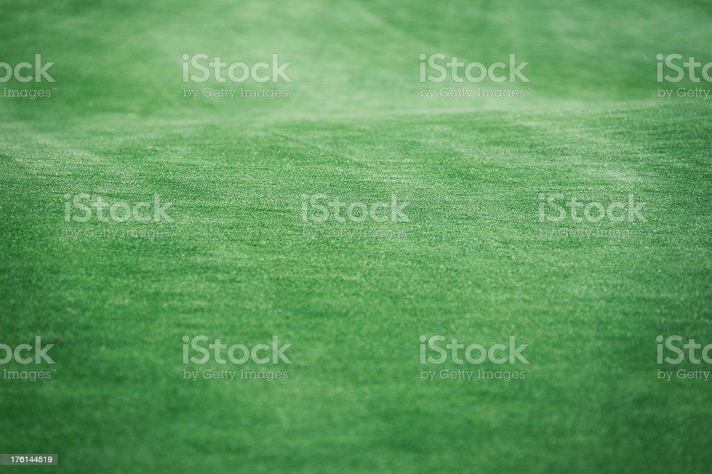 Golf Putting Green Grass royalty-free stock photo