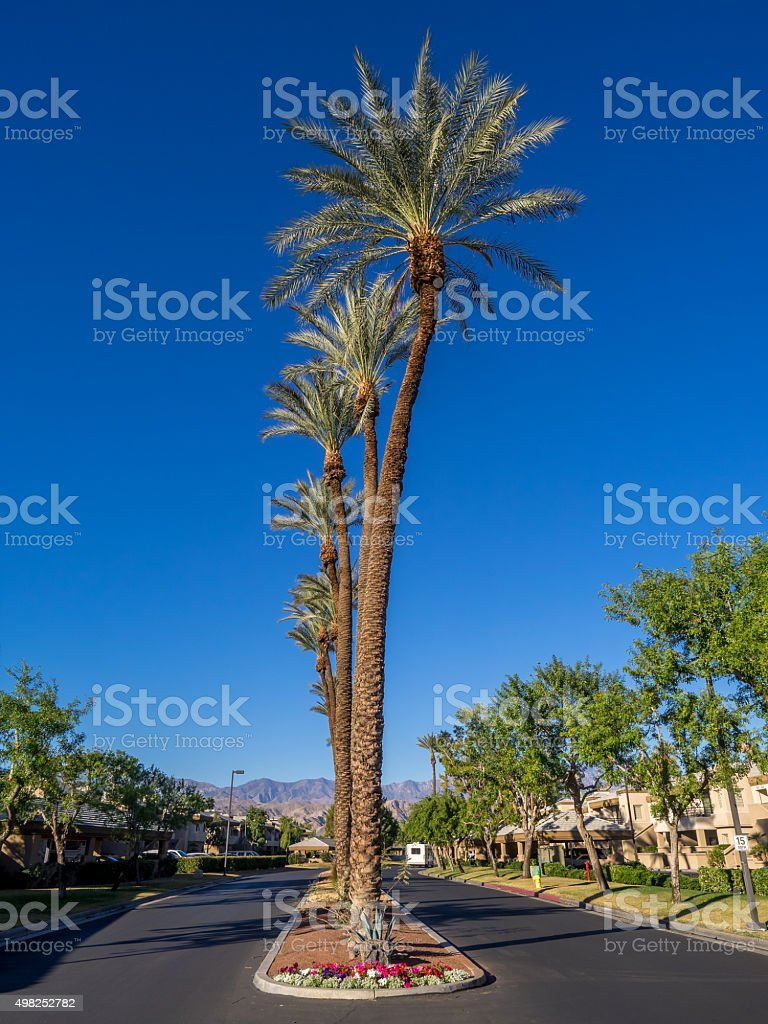 Golf resort, Palm Desert stock photo
