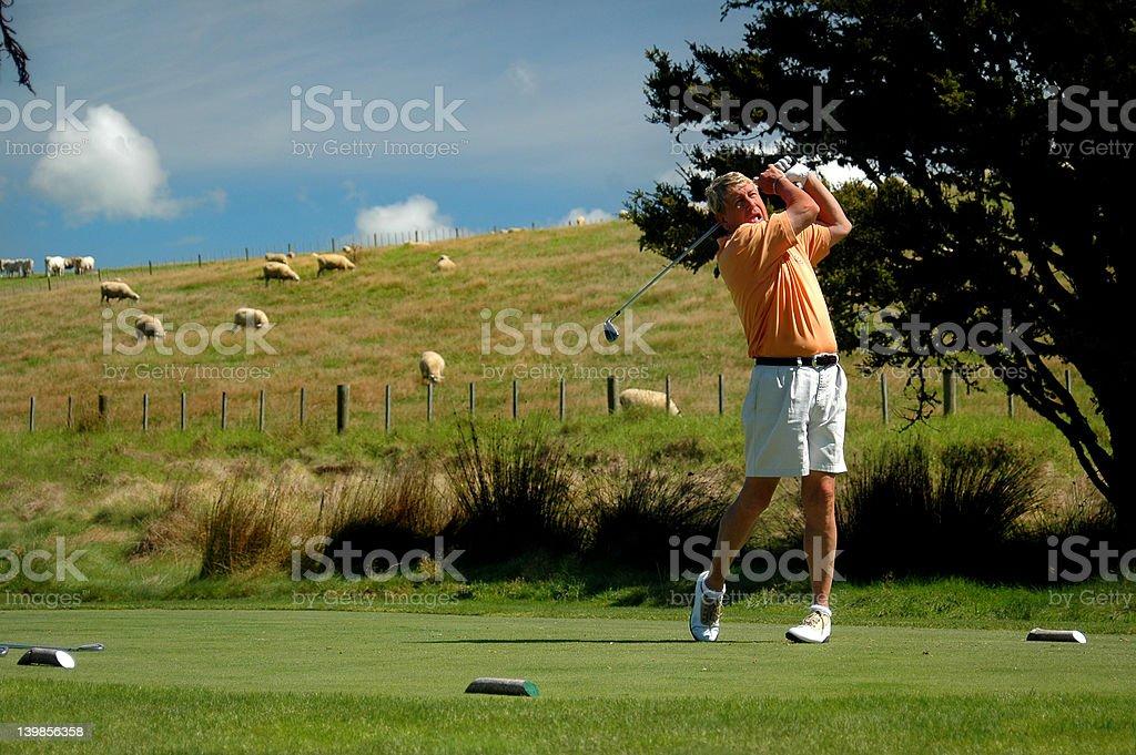 Golf - Unimpressed Sheep stock photo