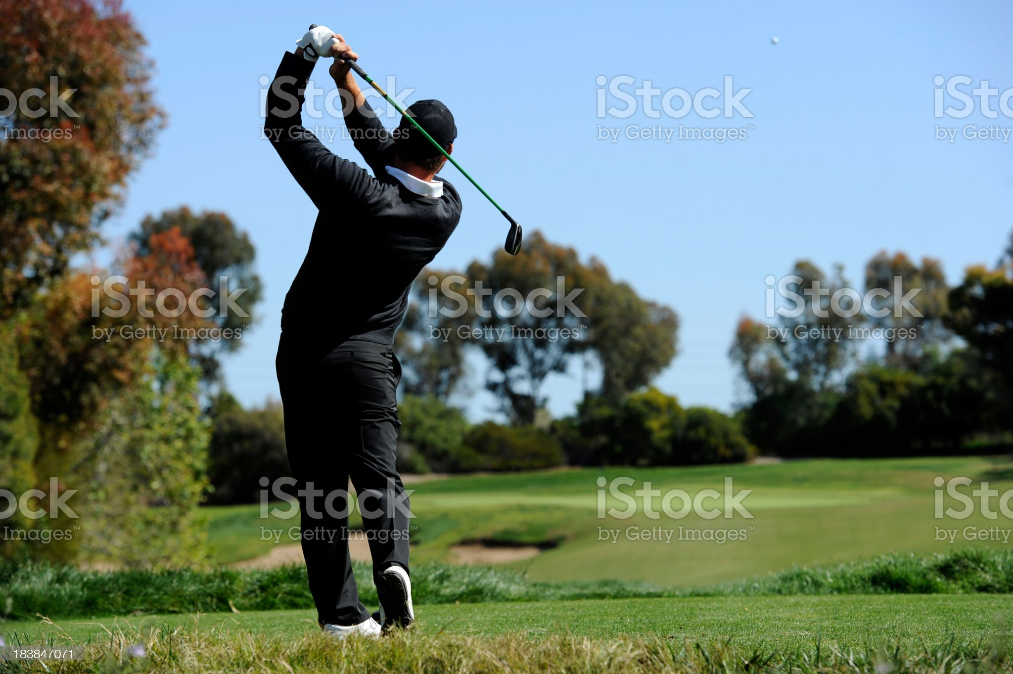 Golfer driving on a golf course with fall foliage  royalty-free stock photo