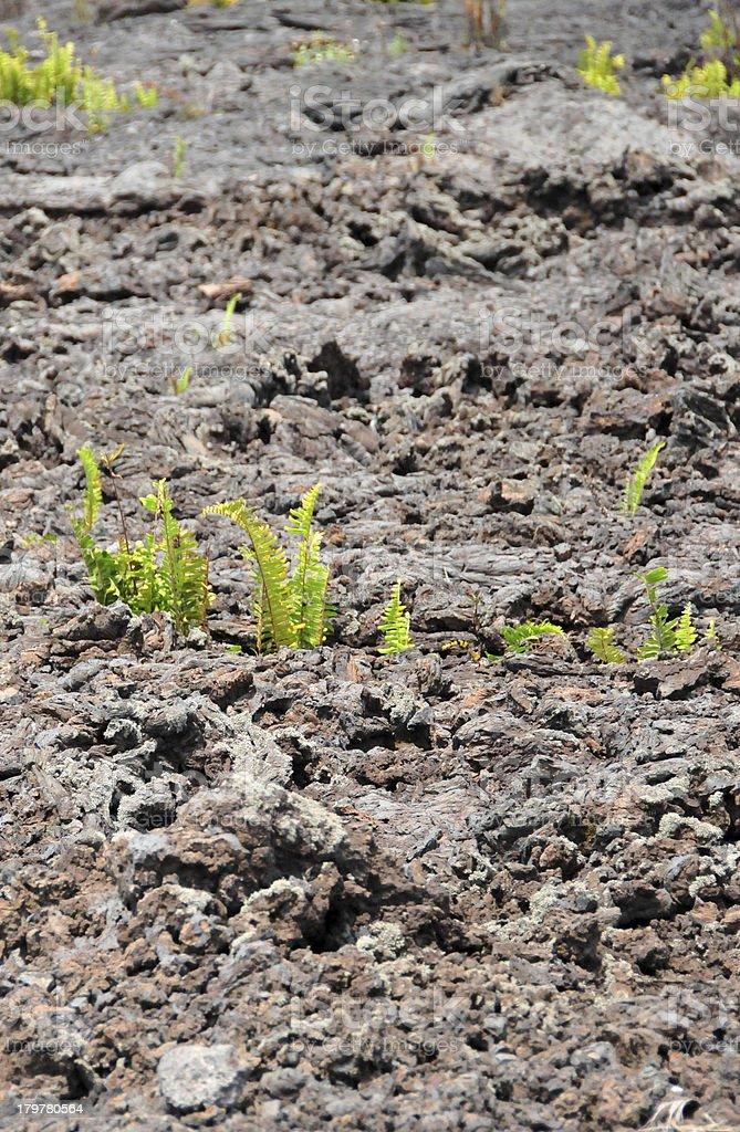 Goma, Nord-Kivu, Democratic Republic of Congo: lava plain with ferns stock photo