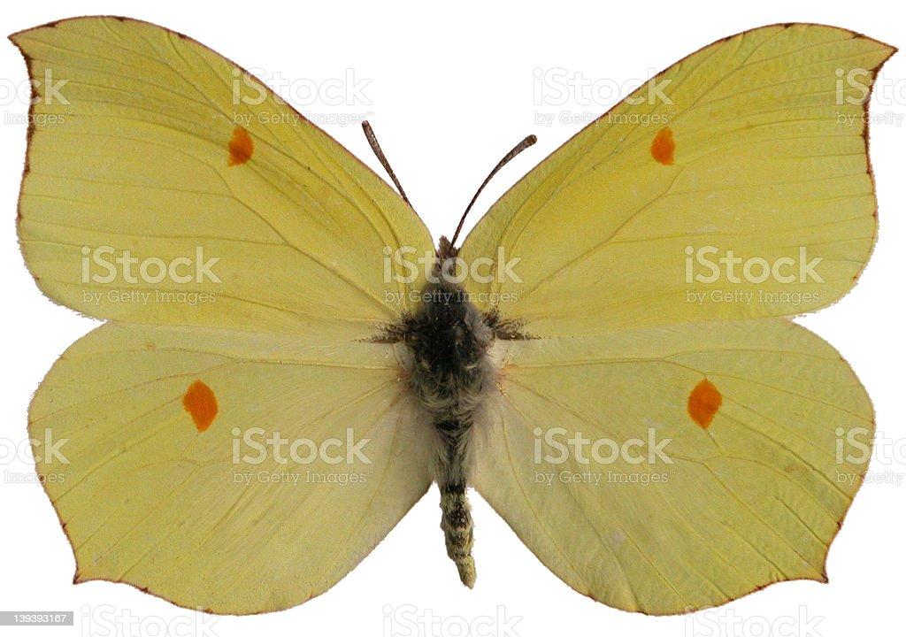 Gonepteryx rhamni royalty-free stock photo