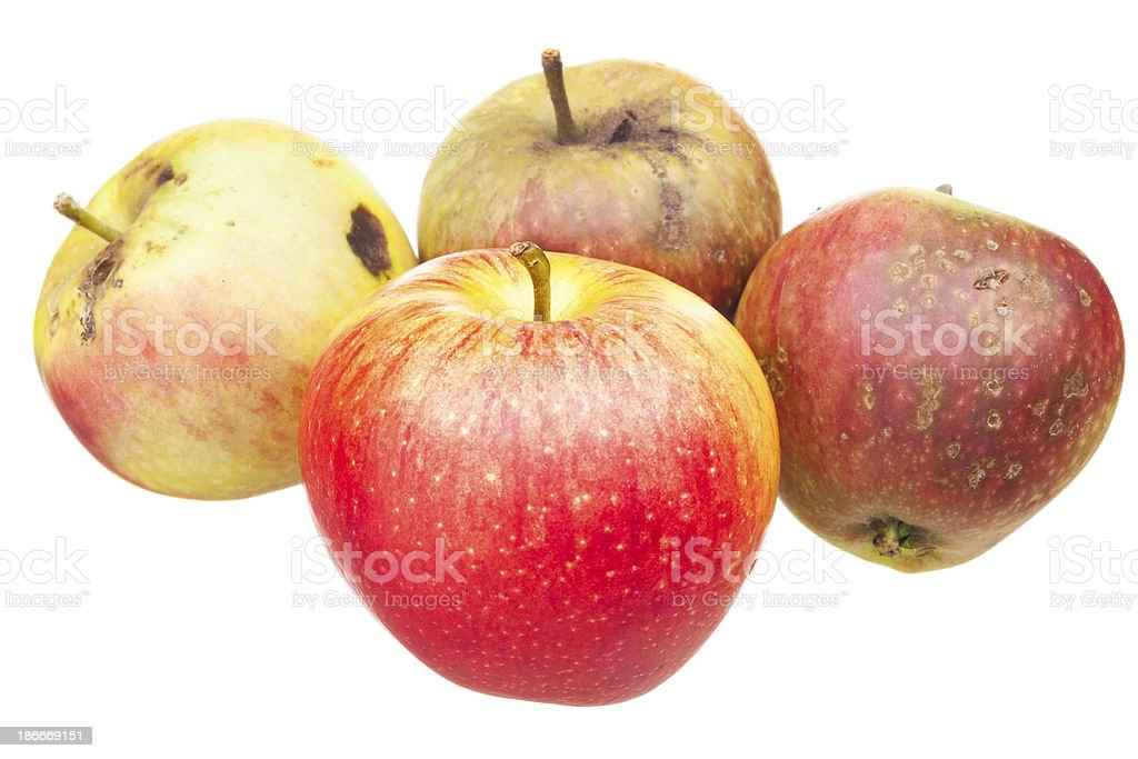 Good apple metaphor stock photo