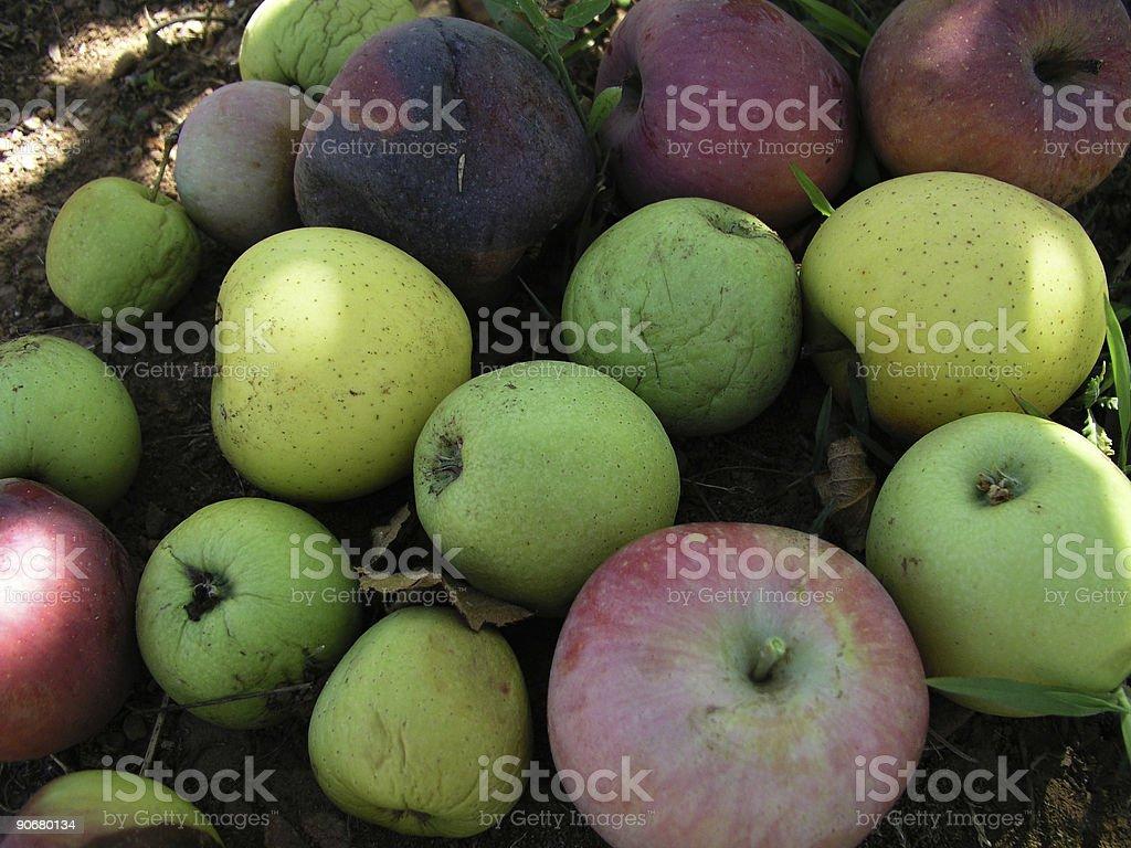 Good Apples, Bad Apples royalty-free stock photo
