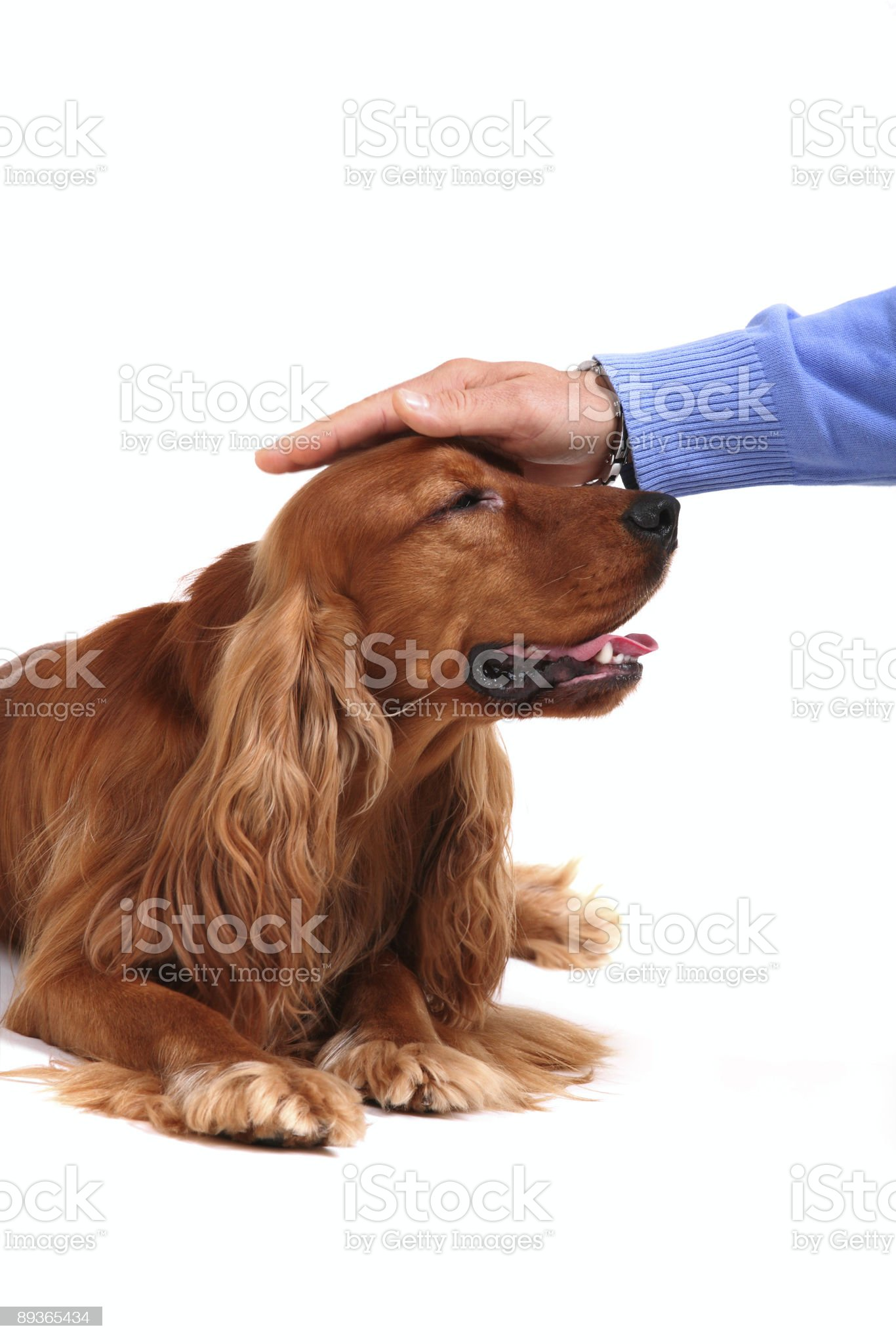 good boy! royalty-free stock photo