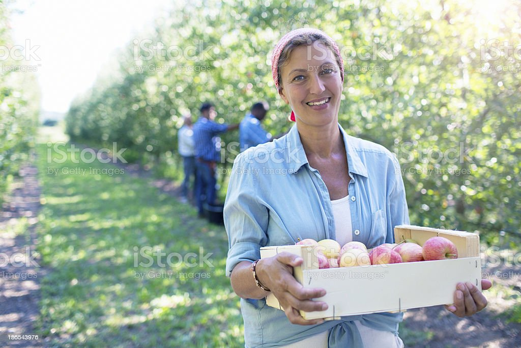 Good harvesting stock photo