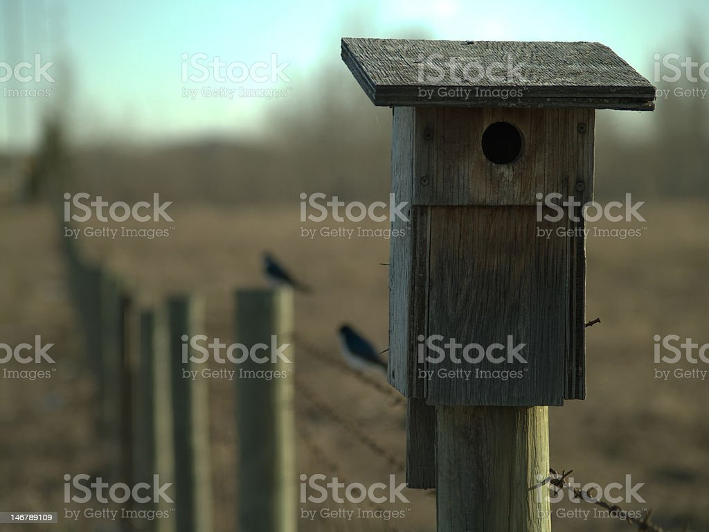 Good home for Barn Swallows. royalty-free stock photo