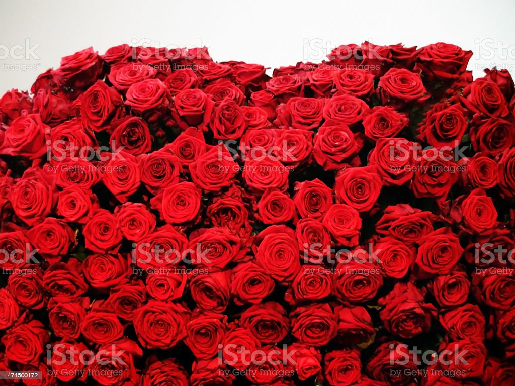 Good Looking Deep Roses stock photo