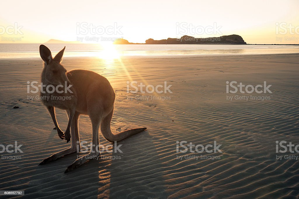 Good morning Australia stock photo