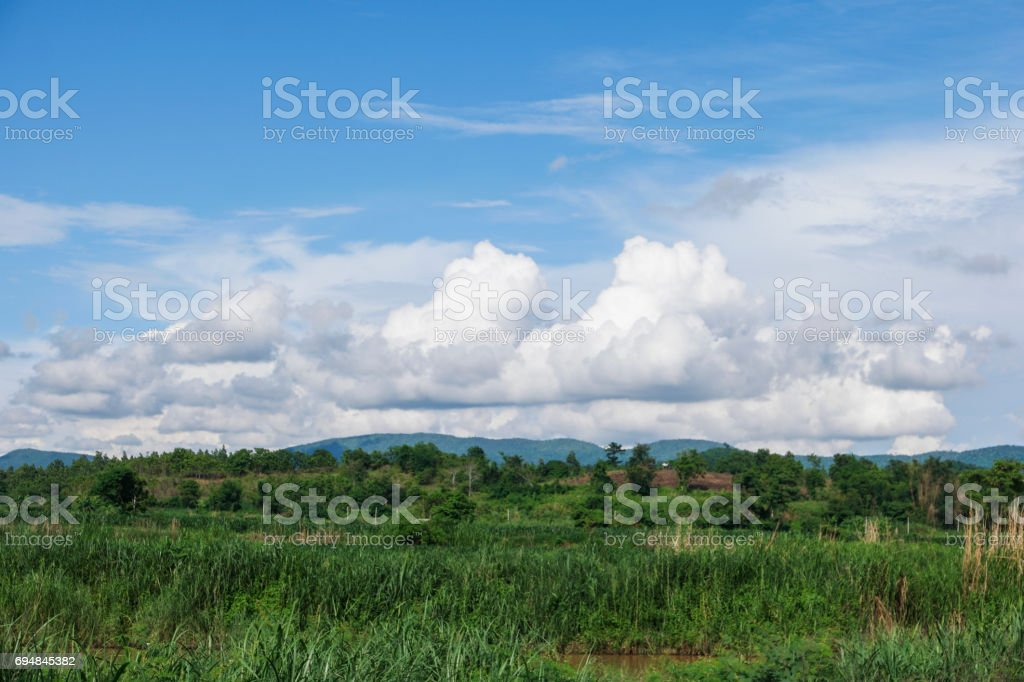 Good weather day, Field and blue sky. stock photo