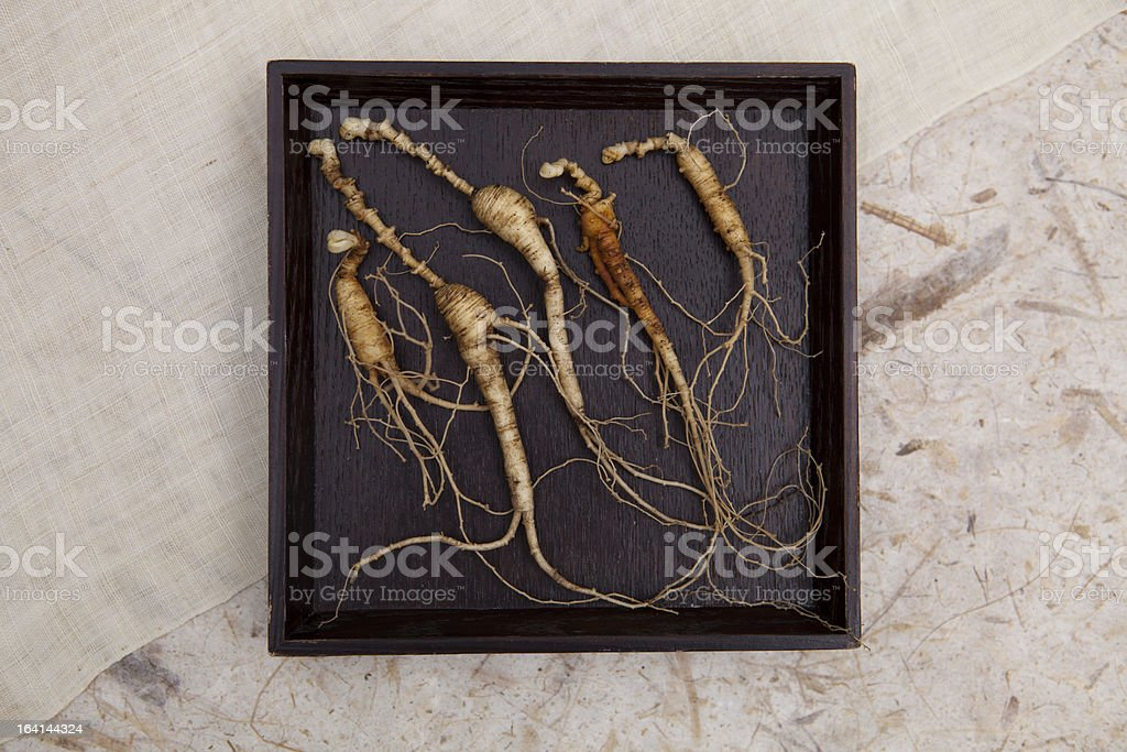 good wild ginseng royalty-free stock photo