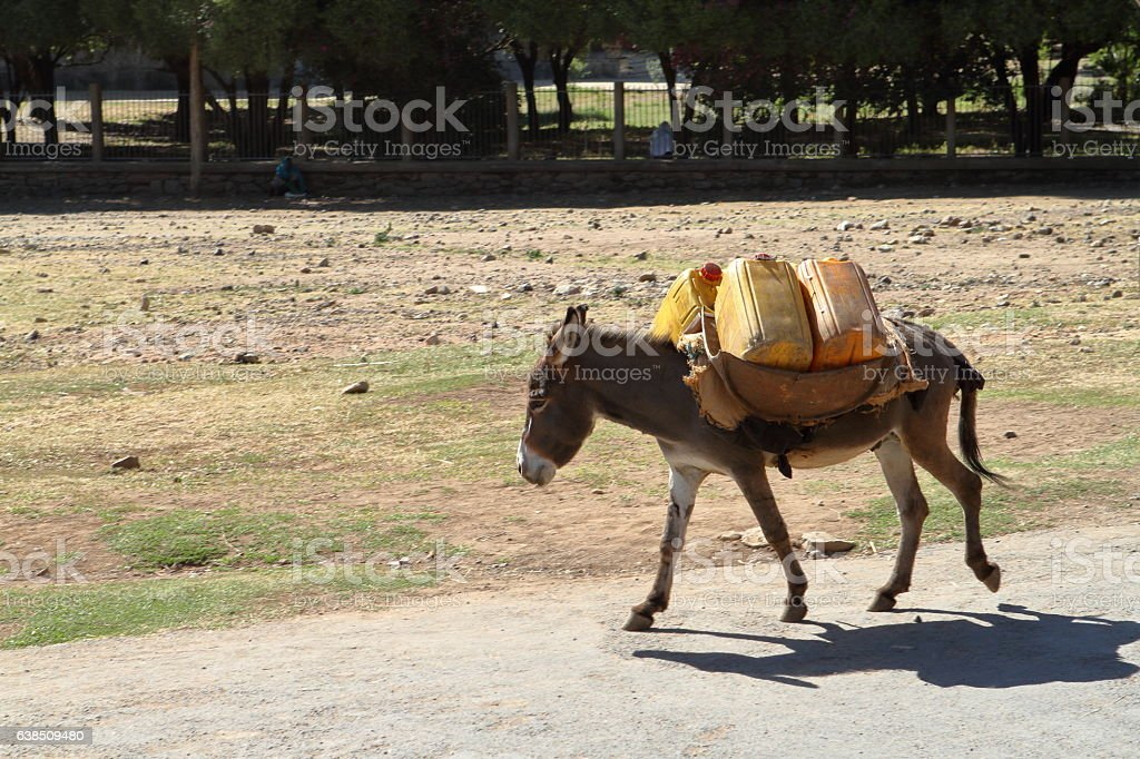 Goods transport with a donkey in Ethiopia stock photo