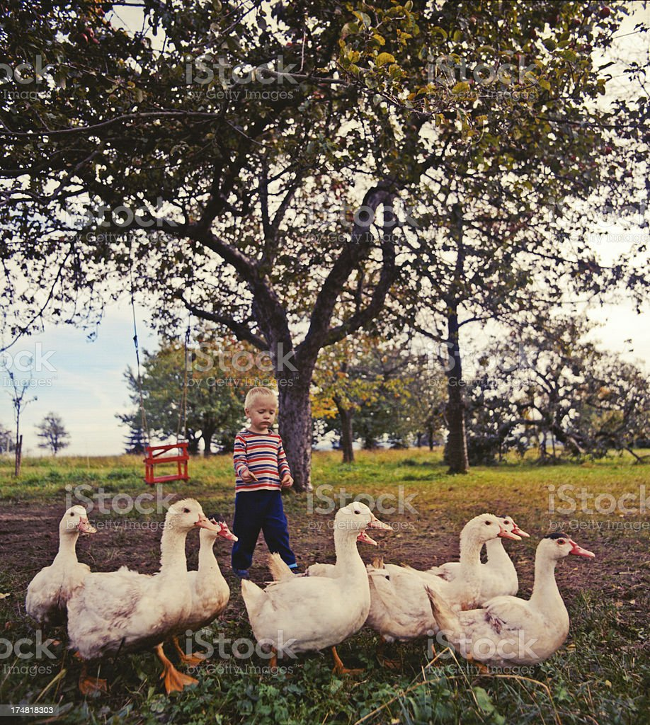 Goose chaser royalty-free stock photo