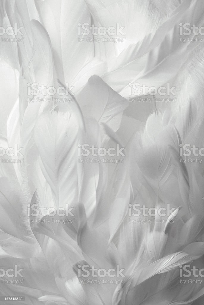 Goose Feathers Background stock photo