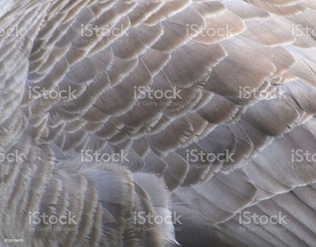 goose feathers macro stock photo