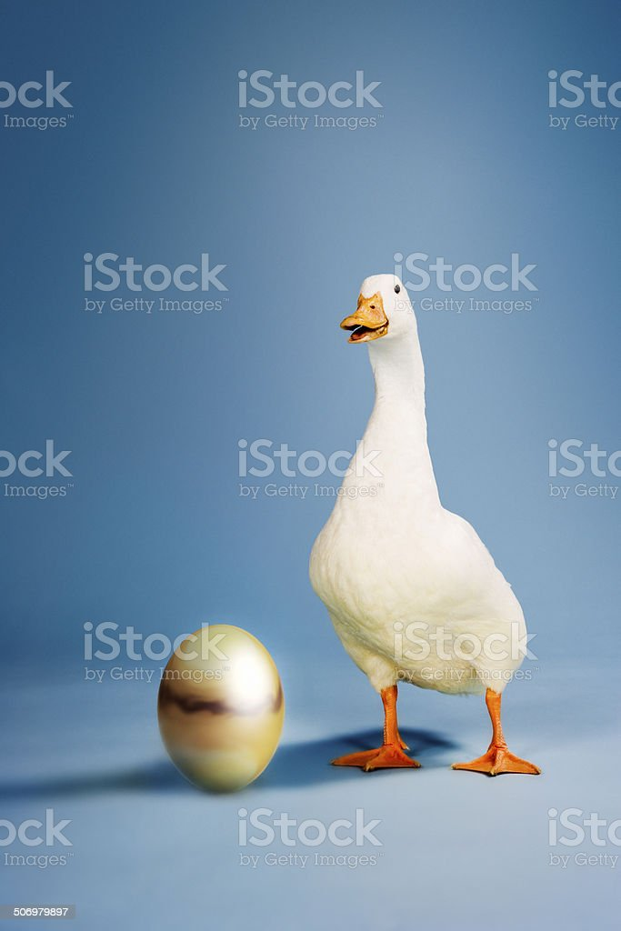 Goose Standing By Golden Egg stock photo