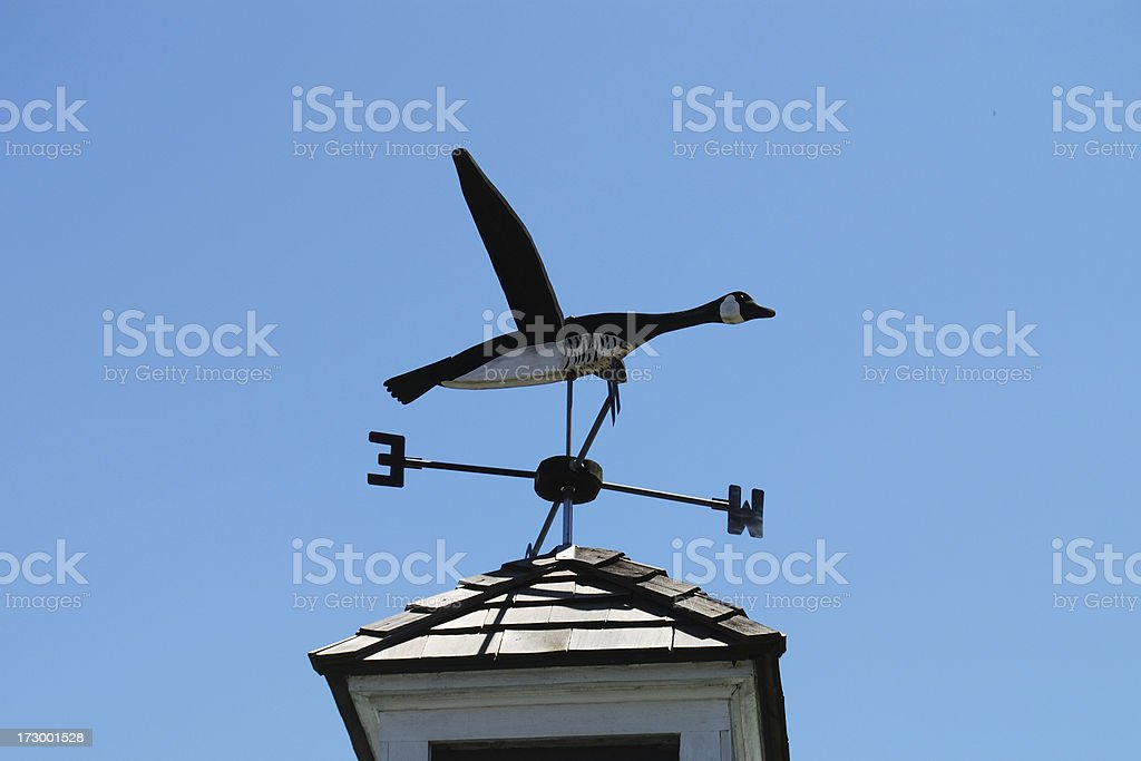 Goose Weather Vane stock photo