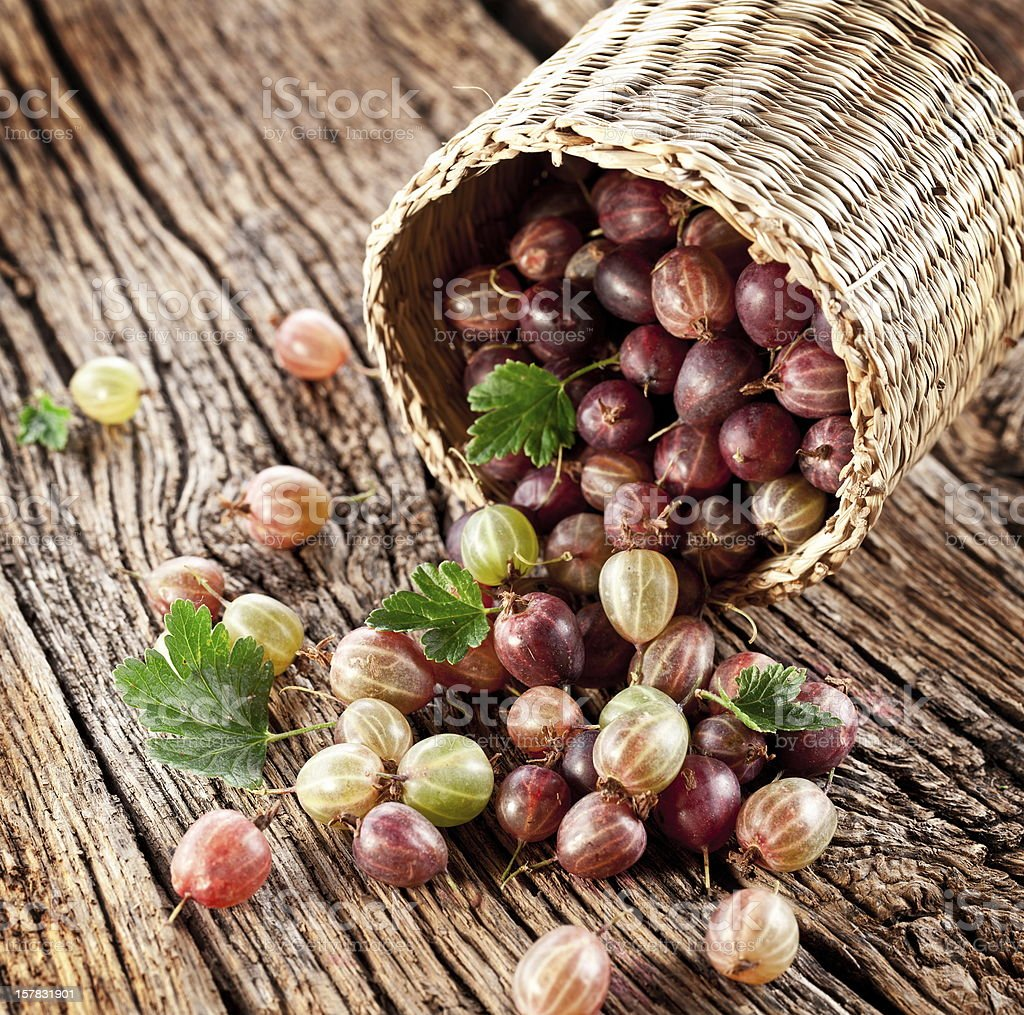 Gooseberries have dropped from the basket. royalty-free stock photo